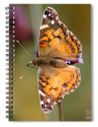 American Lady Butterfly Spiral Notebook