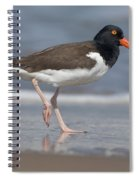 American Oystercatcher On Beach Spiral Notebook