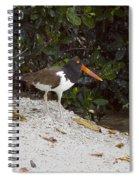 American Oystercatcher Spiral Notebook