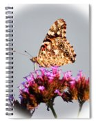 American Painted Lady Butterfly White Square Spiral Notebook