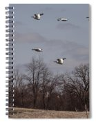 American Pelican Fly-over Spiral Notebook