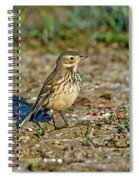 American Pipit Spiral Notebook