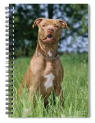 American Pit Bull Terrier Spiral Notebook