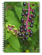 American Pokeweed  Spiral Notebook