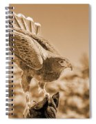 American Red Tail Hawk Spiral Notebook