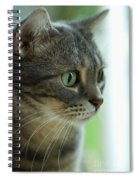 American Shorthair Cat Profile Spiral Notebook