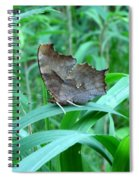 American Snout Butterfly Spiral Notebook