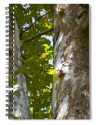 American Sycamore Spiral Notebook