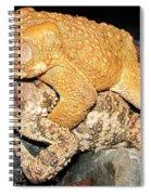 American Toads  Spiral Notebook