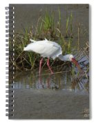 American White Ibis Spiral Notebook