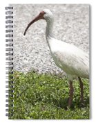 American White Ibis Poster Look Spiral Notebook