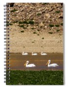 American White Pelicans Spiral Notebook