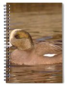American Wigeon Spiral Notebook