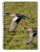 American Wigeon Pair In Flight Spiral Notebook