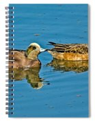 American Wigeon Pair Swimming Spiral Notebook