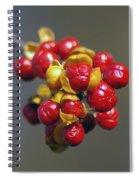 American Winterberry Spiral Notebook