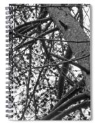 Amidst The Pines Is The Barrens Spiral Notebook