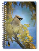 Among The Catkins Spiral Notebook
