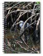 Among The Mangrove Roots Spiral Notebook