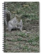Gray Squirrel Among The Pine Cones Spiral Notebook