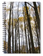 Amongst The Trees Spiral Notebook