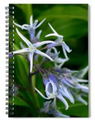 Amsonia Blue Stars Spiral Notebook