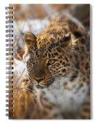 Amur Leopard Spiral Notebook