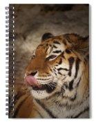 Amur Tiger 3 Spiral Notebook