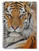 Amur Tiger Magnificence Spiral Notebook