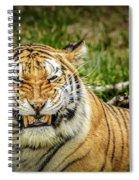 Amur Tiger Smile Spiral Notebook
