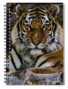 Amur Tiger Watching You Spiral Notebook