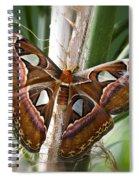 An Atlas Moth  Spiral Notebook