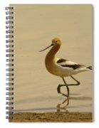 An Avocet Wading The Shore Spiral Notebook