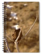 An Eagle Day Dreams Spiral Notebook