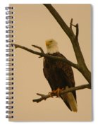 An Eagle In An Old Snag Spiral Notebook