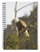 An Eagle In The Spring Spiral Notebook
