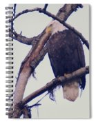 An Eagle Resting  Spiral Notebook