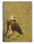 An Eagle Stretching Its Wings Spiral Notebook