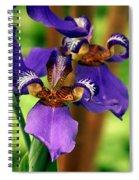 An Eyeful Iris Spiral Notebook