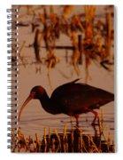 An Ibis Feeding Spiral Notebook