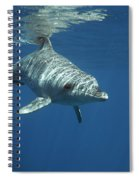 An Indo Pacific Bottlenose Dolphin Spiral Notebook