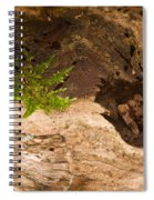 An Isolated Moss Plant Spiral Notebook