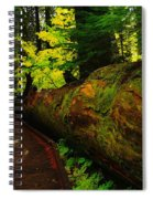 An Old Fallen Tree Spiral Notebook