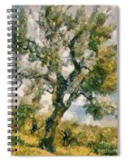 An Old Olive Grove Spiral Notebook