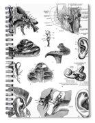 Anatomy: Human Ear Spiral Notebook