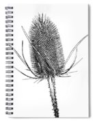 Anatomy Of A Weed Solarized Spiral Notebook