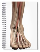 Anatomy Of The Foot Spiral Notebook