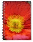 Ancient Flower 4 - Poppy Spiral Notebook
