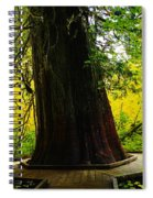 Ancient Old Growth Spiral Notebook