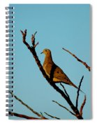 And A Dove In A Tree Spiral Notebook